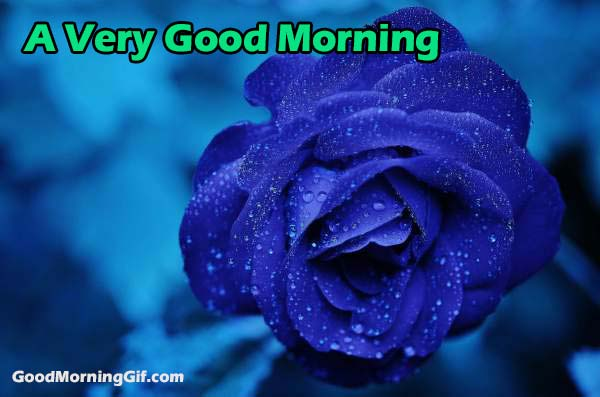Good Morning Images With Flowers & Good Morning Wishes