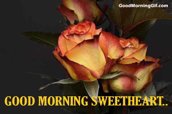 Good Morning Flowers Images Good Morning Wishes