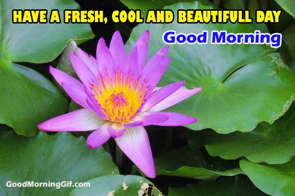Good Morning Flower Image Free Download
