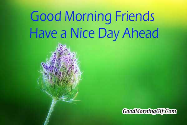 Good Morning Friend Have A Nice Day