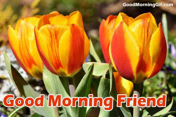 Good Morning Friends Images With Flowers