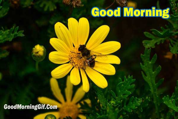 Good Morning Have a Wonderful Day Ahead