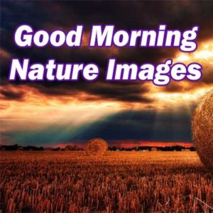 Good Morning Nature Images with Quotes for Whatsapp & Facebook