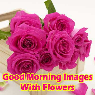 Images With Flowers & Good Morning Wishes