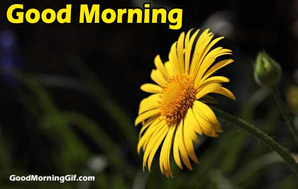 Good Morning Images with Yellow Flowers