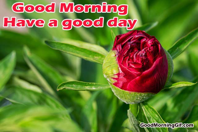 Good Morning Red Flower