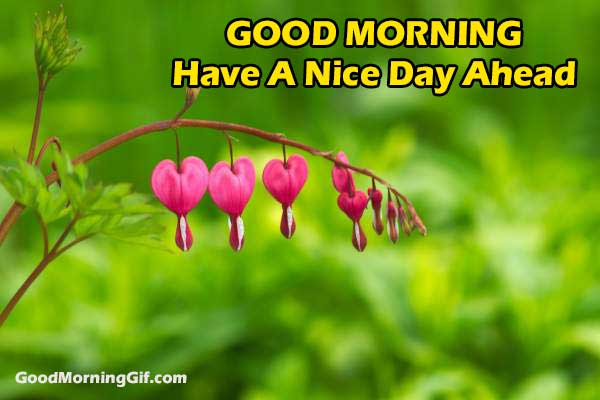 Good Morning Wishes with Flowers Images for Facebook