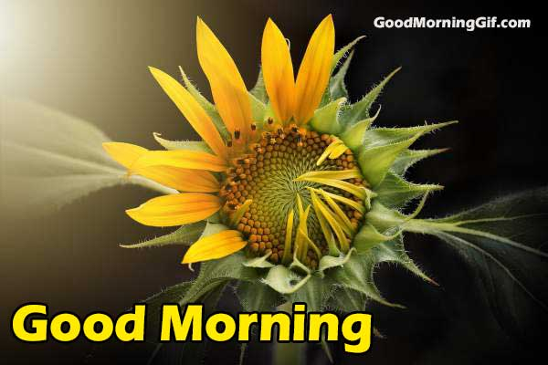 Image of Good Morning with Flower