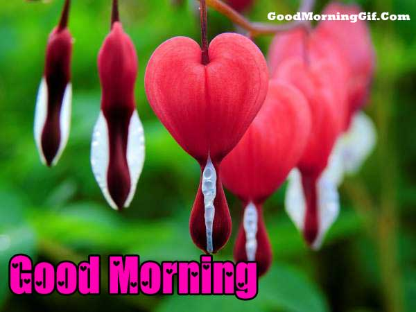 Lovely Good Morning Wallpaper