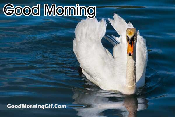 Nature Morning Images