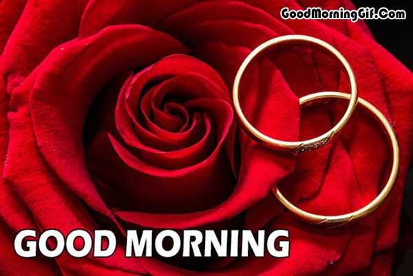 Red Rose Good Morning Photo