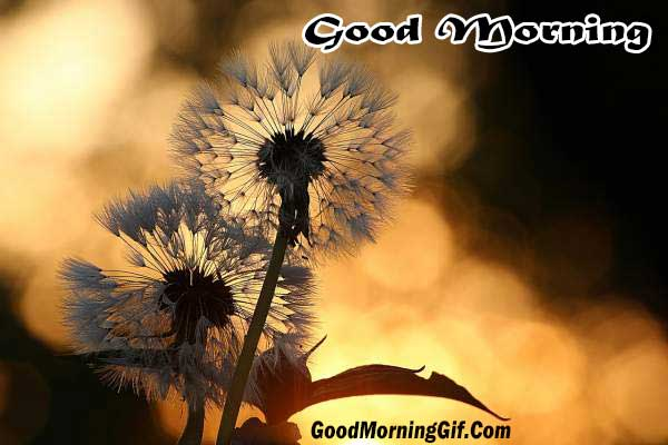 Good Morning Images Good Morning Gif Good Morning Wallpaper