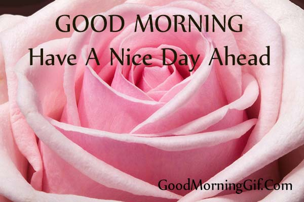 Good Morning Have A Nice Day With Rose