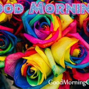 30 Good Morning Rose Images Photo For WhatsApp, Facebook, Pinterest