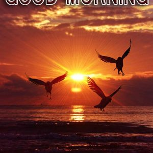 30 Good Morning Sunrise Images Photo For WhatsApp, Facebook, Pinterest