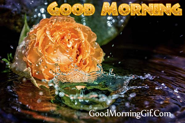 Good Morning Yellow Rose Images